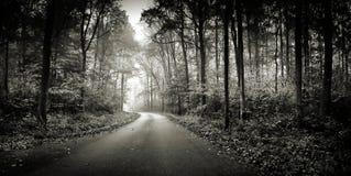 In het hout in grayscale Stock Foto's