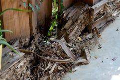 Het hout met termietenschade stock foto's