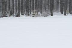 Het hout op een de winterdag Stock Foto's