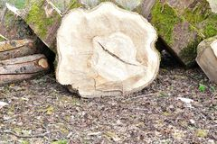 het hout opent de grond het programma Royalty-vrije Stock Foto's