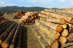 Het hout opent het bos het programma Royalty-vrije Stock Afbeelding