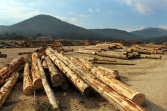 Het hout opent het bos het programma Royalty-vrije Stock Foto's