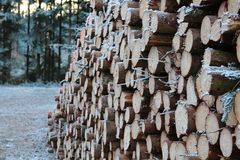 Het hout opent het bos het programma Royalty-vrije Stock Foto