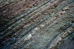 Het hout pettrified in steen met lagen Stock Foto's