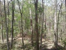 Het hout van Arkansas stock foto's