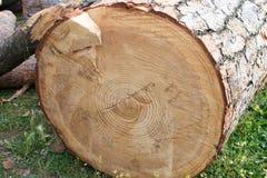 Het hout van Cutted Stock Foto's