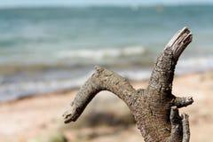 Het hout van de afwijking op het strand stock fotografie