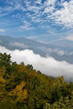 Het hout van de berg in wolken Royalty-vrije Stock Afbeeldingen