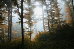 Het hout van de fantasieherfst met mist stock fotografie