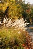 Het hout van de herfst stock afbeeldingen