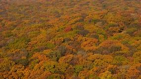 Het hout van de herfst Royalty-vrije Stock Foto's