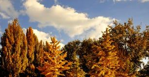 Het hout van de herfst Stock Afbeelding