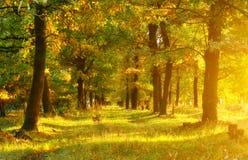 Het hout van de herfst Bezinning in meer Stock Foto's
