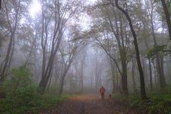 Het hout van de herfst Bezinning in meer Royalty-vrije Stock Fotografie