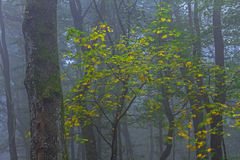 Het hout van de herfst Bezinning in meer Royalty-vrije Stock Afbeeldingen