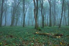Het hout van de herfst Bezinning in meer Stock Afbeeldingen