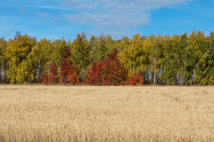 Het hout van de herfst Bezinning in meer Stock Afbeelding
