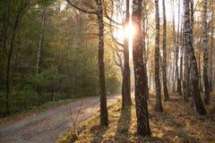 Het hout van de herfst Bezinning in meer Royalty-vrije Stock Foto