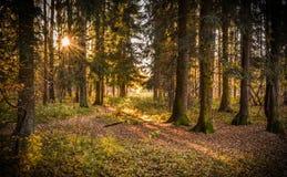 Het hout van de herfst Bezinning in meer Stock Foto