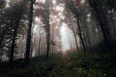 Het hout van de de herfstwinter met dikke mist royalty-vrije stock fotografie