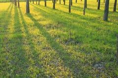 Het hout van de lente Stock Foto