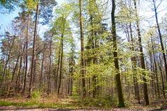 Het hout van de lente Royalty-vrije Stock Foto's