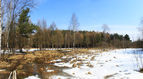 Het hout van de lente Stock Afbeelding