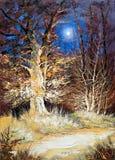 Het hout van de nacht Royalty-vrije Stock Afbeeldingen