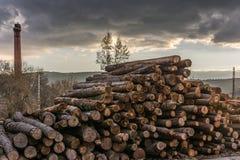 Het hout van de premiepijnboom voor meubilairproductie royalty-vrije stock foto