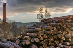 Het hout van de premiepijnboom voor meubilairproductie royalty-vrije stock afbeelding