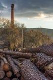Het hout van de premiepijnboom voor meubilairproductie royalty-vrije stock foto's