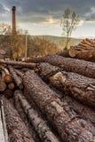 Het hout van de premiepijnboom voor meubilairproductie royalty-vrije stock afbeeldingen