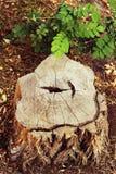 Het hout van de stomp Royalty-vrije Stock Foto's
