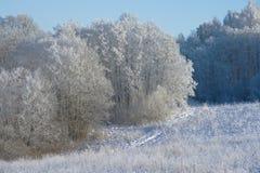 Het hout van de winter. Stock Afbeeldingen