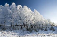 Het hout van de winter. Royalty-vrije Stock Afbeeldingen