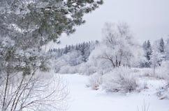 Het hout van de winter Stock Foto