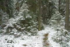 Het hout van de winter Royalty-vrije Stock Foto's
