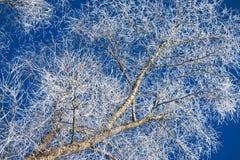 Het hout van de winter Royalty-vrije Stock Fotografie