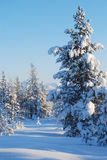 Het hout van de winter Royalty-vrije Stock Foto