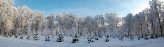 Het hout van de winter Stock Afbeelding