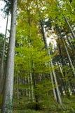 Het hout van de zomer   Stock Foto's