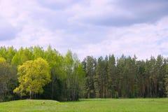 Het hout van de zomer Royalty-vrije Stock Foto's