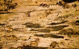 Het hout van Grunge met paddestoel, vorm en gaten royalty-vrije stock fotografie