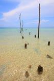 Het hout van het karkas in het overzees Royalty-vrije Stock Foto's