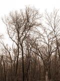 Het hout van Missouri Royalty-vrije Stock Fotografie