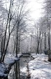 Het hout van Worsley in de winter Stock Fotografie