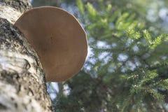 Het houten Detail van de Paddestoel Stock Foto