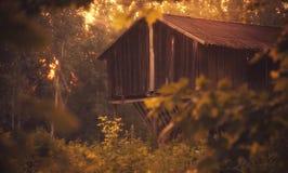 Het houten huis van de dierenvoeder in het bos Royalty-vrije Stock Foto's