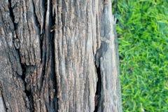 Het houten latje op het groene gras Royalty-vrije Stock Fotografie