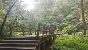 Het houten Nationale Park van Brugzhangjiajie stock afbeeldingen
